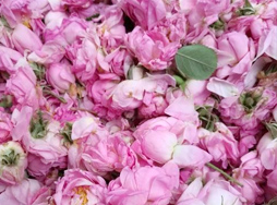 大马士革玫瑰腌制鲜花