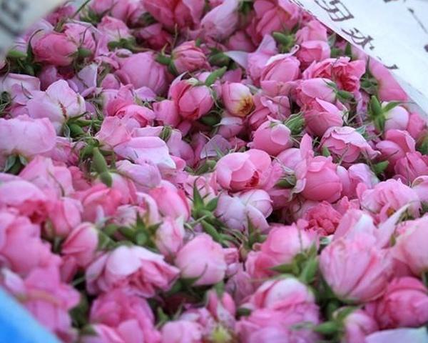陕西大马士革玫瑰鲜花