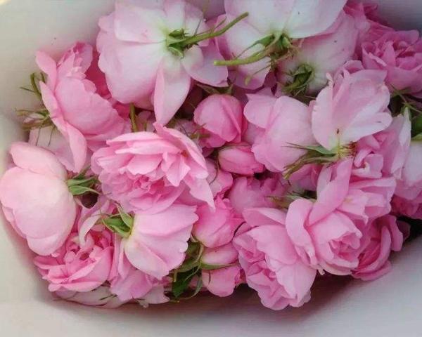 山东大马士革玫瑰腌制鲜花