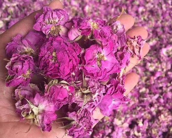 冠县大马士革玫瑰干花