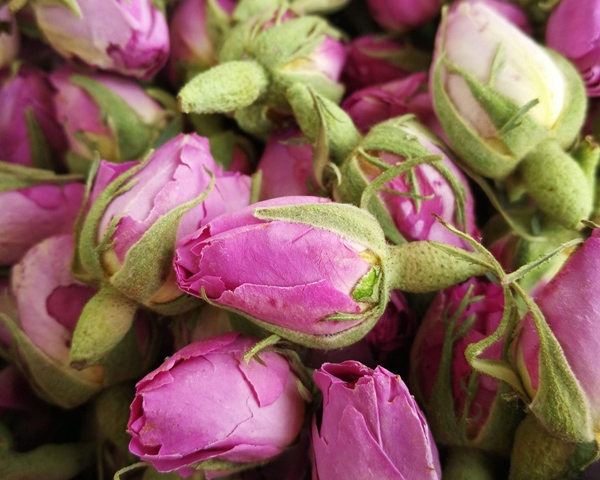 北京大马士革玫瑰干花